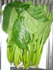 Komatsuna Japanese Mustard Spinach 50 Seeds