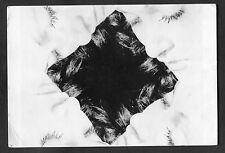 C1996 Art Card: Buds by Erwin Blumenfeld