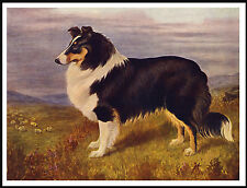ROUGH COLLIE IN RURAL SETTING LOVELY VINTAGE STYLE DOG ART PRINT POSTER