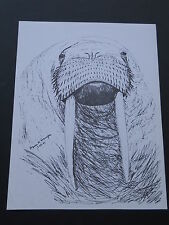 Walrus Large Print 8-1/2 x 11 Ready for Framing