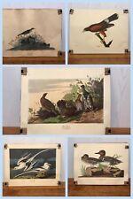 """1942 Vintage AUDUBON BIRDS #38 /""""KENTUCKY WARBLER Full Color Art Plate Lithograph"""