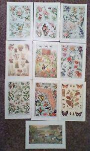 Lot Of 10 - Vintage Original  Art Prints Full Color Flowers, Cactus, Butterflies