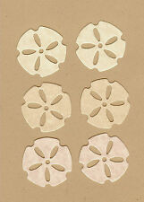 Mini Sand Dollars-B#1 Die Cuts - AccuCut