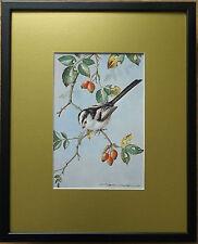 Basil Ede print, 20''x16'' frame, Framed Bird wall art, Long Tailed Tit print