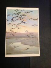 J1-1 Postcard Unused Safe Sands For The Night Peter Scott Birds
