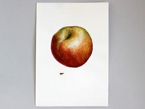 Apple Watercolor Painting Original Art Still Life Home Decor Kitchen