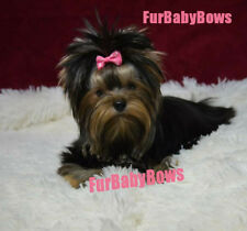 New listing 40x Pet Puppy grooming wholesale dog hair Bow with clips * 1 Free Halloween Bow