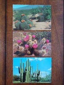 3 Postcards Cactus In The Desert,  Saguaros, Strawberry Hedgehog,  Barrel