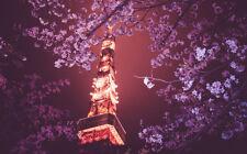 "TOKYO SPRING BLOSSOMS A4 POSTER GLOSS PRINT LAMINATED 11.7"" x 7.3"""