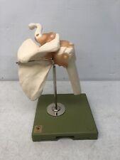 Rare Vintage Somso Premium Functional Shoulder Joint Anatomical Anatomy Model