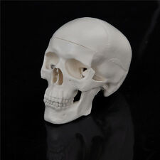 Teaching Mini Skull Human Anatomical Anatomy Head Medical Model Convenient SEAU