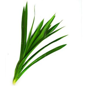5 Pcs Pandanus Leaves For Cooking , Flavouring , Fragrance Etc