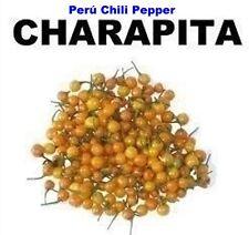 Aji Chili Pepper Charapita. 25 original seeds from Peru. Very tiny and hot.
