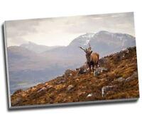 "Wild Stag Scottish Highlands Canvas Print Wall Art 30x20"" A1"