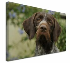 More details for german wirehaired pointer x-large 30