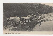 France, Attelage Basque, Ox Cart ND Postcard, A855