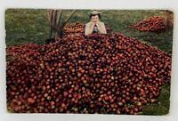 Agriculture Farming Postcard Picking Apples Orchard Scene VTG 1910 Nampa Idaho