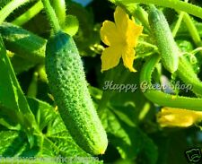 VEGETABLE - CUCUMBER GHERKIN F1 - 100 SEEDS pickler for early pickling Cornichon