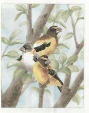 Vignette Tissu 12x15 cm Sucrier à ventre jaune Piece of Cotton Fabric Bananaquit