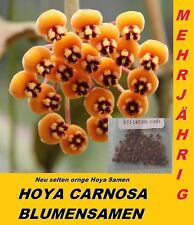 20x Hoya Samen Hoya Carnosa Blumensamen Mehrjährig Zimmerpflanze Neu Sorte #217