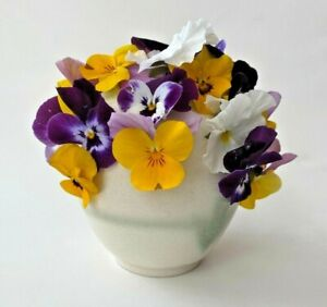 Hand crafted Stoneware Pansy Pot Vase 4.5 Inches Tall Unique