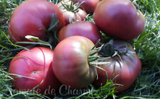 10 graines de tomate rare  BORDO  vegetable tomato seeds bio