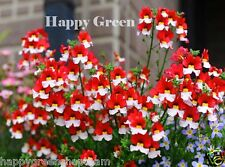NEMESIA DANISH FLAG - 1100 SEEDS - Nemesia strumosa - RED WHITE FLOWER