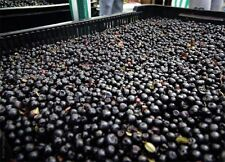 Bilberries - Organic Certified - Freeze Dried - 2 oz (1/8 lb) - THE VERY BEST!