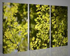 Quadri moderni canvas IL BELLO DEL VERDE stampe su tela immagini di fiori 130x90