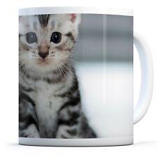 Cute Grey Kitten - Drinks Mug Cup Kitchen Birthday Office Fun Gift #8433