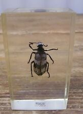 Real Black Bug Beetle Insect in Lucite Two's Company