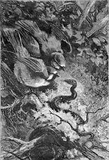 OISEAUX - ATTAQUE NOCTURNE d'un SERPENT - Gravure du 19e (dessin de Giacomelli)