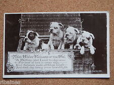 R&L Postcard: Bulldog Boxer Dog Puppies in Picnic Basket, Birthday Greetings