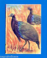 ANIMALI - Lampo 1964 - Figurina-Sticker n. 261 - FARAONA VULTURINA -New
