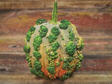 Pumpkin MUSQUEE Du MAROC-Pumpkin Seeds-LOVES HOT WEATHER-20 FRESH SEEDS.