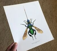 Durin Print EMERALD BEE/Bees GREAT DETAIL! L@@K!