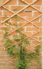 # x 1 Natural  WOOD 5FT X 2FT Expanding Wooden Garden Trellis5