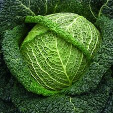 Légumes Choux F1 Wirosa Savoie 20 Graines