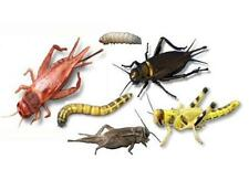 Any 3 Tubs Crickets Locusts Mealworms Waxworms Mix & Match from Livefood UK Ltd.
