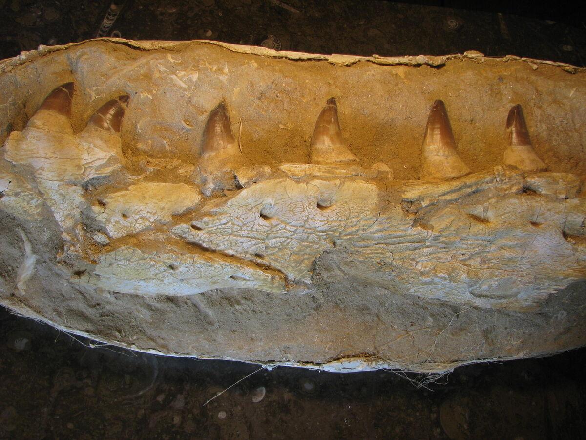 Rock-n-Fossils Fossils-n-Rocks