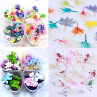 Mixed Dried Flowers Nail Art DIY Bottle Preserved Flowers Decoration Nails Tips