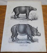 1834 Antique Print///RHINOCEROS///2 Illustrations