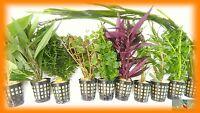 PLANTA PARA ACUARIO; LOTE DE 10 PLANTAS OFERTA