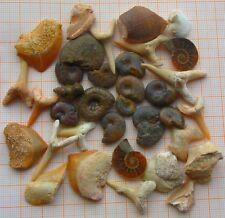 Grundstock einer Fossiliensammlung