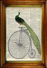 Vintage Dictionary Print: Peacock & Penny Farthing - Victorian, Surreal & Unique