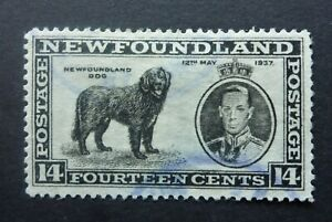 NEWFOUNDLAND #238v VF USED (MALE DOG VARIETY W/ UNLISTED DOUBLING) CAT.$50+ CAN.