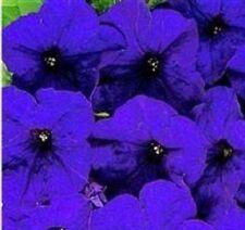 Petunia - Mirage Blue - 50 Seeds