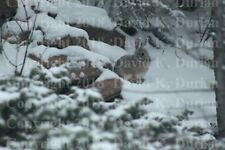 "Nature Photography, ""Easter Bunny in Winter"", on Canvas, 16""x20"",.75"" Std. Wrap"