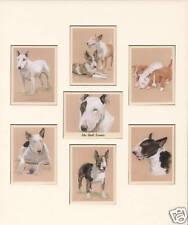 """Der Bull Terrier-Sammler Karten Ready to Frame 12""""x10"""" - English Dog Breed"""