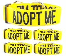Dog Collar 5 For 3 Offer Color Coded Yellow ADOPT ME  Nylon Robust Bright Color